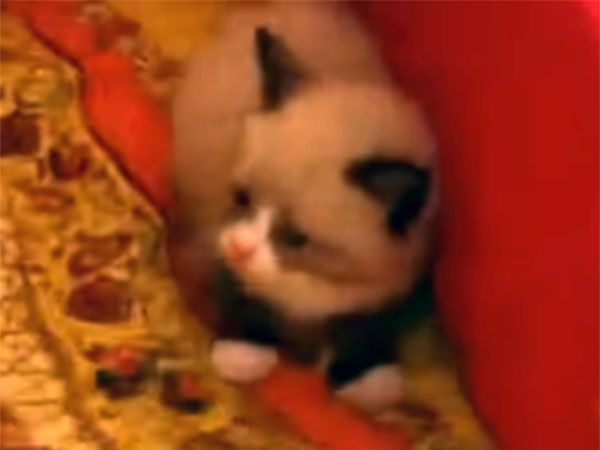 怯える子猫の立ち姿が可愛すぎる1