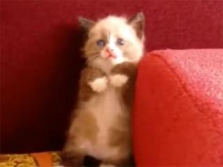 「怖いにゃ~」怯える子猫の立ち姿が可愛すぎる!