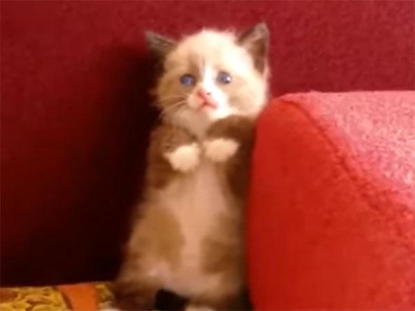 怯える子猫の立ち姿が可愛すぎる2
