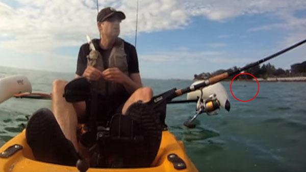 海を泳いでいる犬を、釣り人が救助1