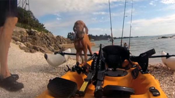 海を泳いでいる犬を、釣り人が救助4