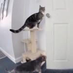 ワンちゃんのためにドアを開けてあげる親切な猫♪