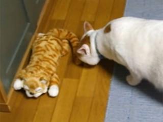 笑い転げる猫のぬいぐるみに、猫たちの反応は?