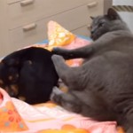 「どくニャ~!」「どかないワン!」猫さんは犬がお嫌い?