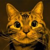 「ごはん〜♪」としゃべって、おねだりする猫のむさしちゃん