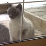 「開けろー!」と、ドアを叩いて鳴らす猫たち♪