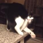 猫が怒って威嚇!そんな緊迫した場面で、コントのようにズルッと滑ってコケてしまいました(笑)