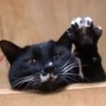 呼ばれると、可愛くお手々を挙げて返事をする黒猫♪