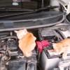 車に乗る前に、「猫バンバン」の安全確認をお忘れなく!