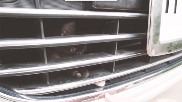 エンジンルームに猫が!