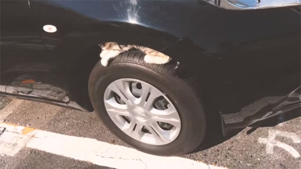 タイヤの間に猫が!