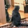 鏡を見る猫の反応がおもしろ過ぎる!