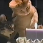 猫パンチでローソクの火を消してしまう凄い猫たち♪