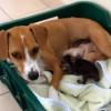 子猫にお乳をあげる犬と、猫のお乳を飲む子犬♪