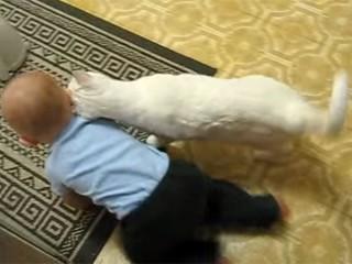 赤ちゃんのハイハイに、白猫がどこまでも付いていく♪