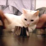 猫が中身の入っているカップを当てる!猫の凄い動体視力