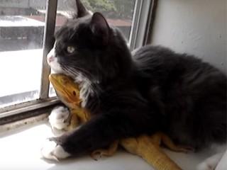 猫がトカゲを抱き締めながら、窓の外の景色を眺めています♪