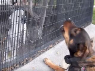 オウムと犬のワンワン合戦が可笑しい♪