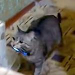 これは賢い! 猫が携帯電話を持って来てくれた♪