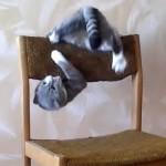 猫の凄い曲芸! 椅子の上で、アクロバットな動きを披露