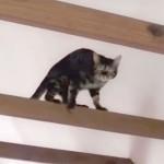 ベンガル猫の凄い身体能力! しなやかで美しい!