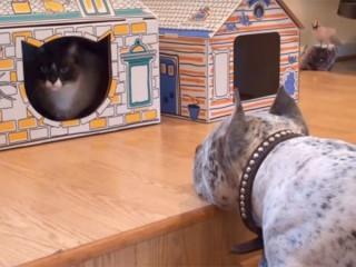 「一緒に遊ぼうよ~」ハウスの中の猫を誘う犬