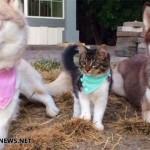 子猫を育てるハスキー犬♪ 「みんな家族わん!」