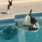 犬に追われた猫が、サーフボードに乗って見事に逃亡!