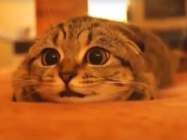 ホラー映画を見ている猫が超かわいい♪「怖いニャ~!」