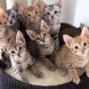 子猫たちの首振りダンス♪ 可愛い過ぎる癒やし動画