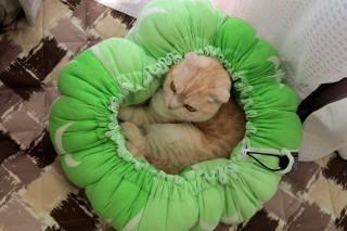 「あったかいニャ♪」 猫と犬の巾着式ベジタブルベッド、広げればマットにも早変わり!