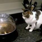 【猫 vs 家電】ポップコーンメーカーとトースターに、びっくり! ポンッ、ポンッ!と弾ける音に、猫退散!