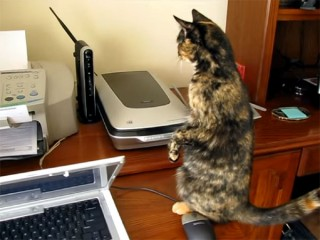 【猫 vs 家電】プリンターに執拗な猫パンチ!  「でも怖いニャ、怖いニャ」 の臆病な戦闘モードに笑えます