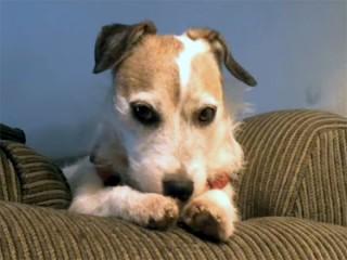 留守番する犬の哀愁が凄すぎ! ぎゅっと抱きしめてあげたい