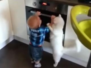 猫が赤ちゃんに教育指導「イタズラはダメにゃ!」