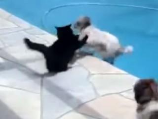 「しつこいニャ!」犬をプールに突き落とす猫