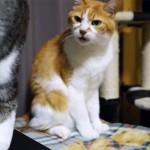 「あんた、お尻が臭いニャ!」同居の猫が真顔で訴える!