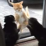 猫が窓ガラス越しに大喧嘩している動画!