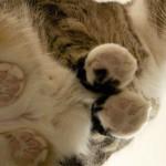 猫とコーギーを、ガラステーブルの下から覗いて見ると…
