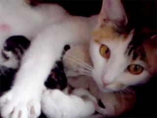 子猫たちを必死で守る母猫「母の愛は強し!」