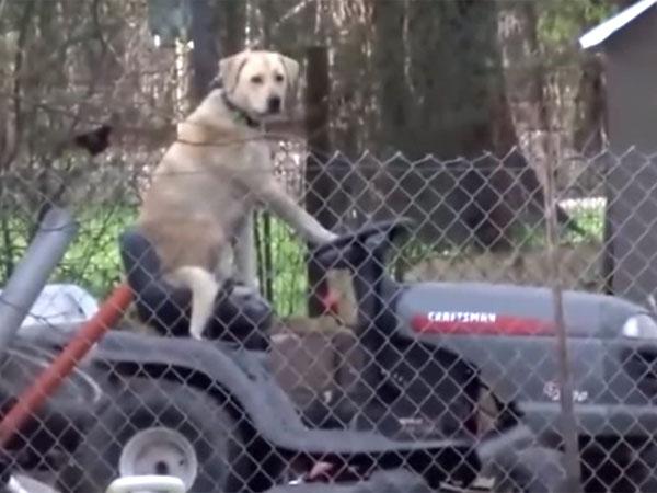 竜巻の被害を伝えているテレビのレポート中に、トラクターに乗る犬の姿を発見!