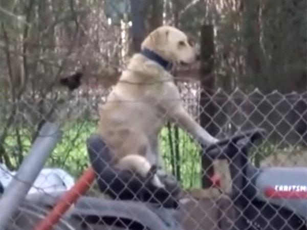 トラクターの運転席に腰を掛けて、ハンドルを握る犬