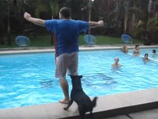 人間をプールに突き落とす愉快なワンちゃん♪