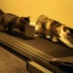 【猫 VS ランニングマシン】猫たちの様々な反応に爆笑!
