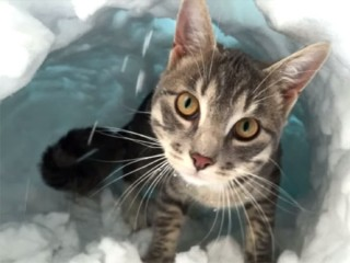 「ドアを開けたら大雪ニャ!」その時、猫はどうする?