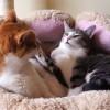 怒られて固まる猫「理不尽だにゃ~!」