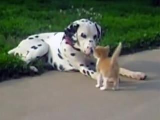 ワンちゃんは子猫が大好き♪ 犬と猫の仲良し動画