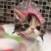 「お風呂大好き!」子猫の可愛いバスタイム♪ キャップを被って湯船に浸かっている姿に萌えます!