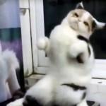 楽しい踊りを見せてくれるダンシング・キャット♪