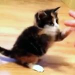 受けてみたい世界最弱の猫パンチ! めっちゃ可愛すぎる子猫の姿に癒やされます♪